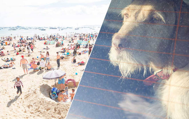 The poor dogs were left in boiling heat