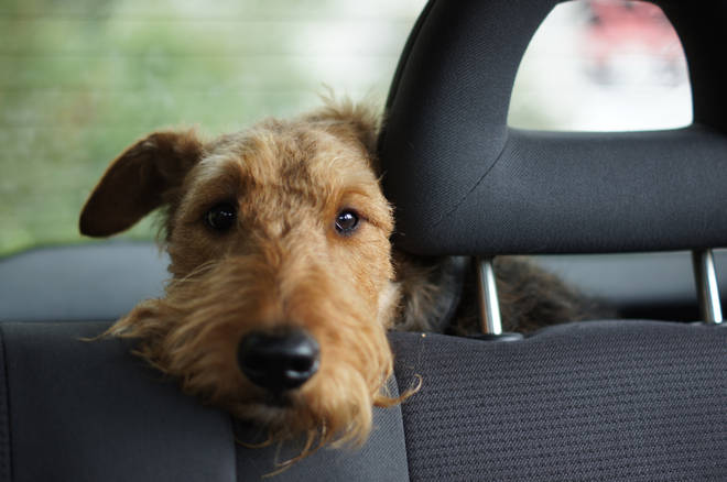 Leaving dogs in hot cars is inhumane