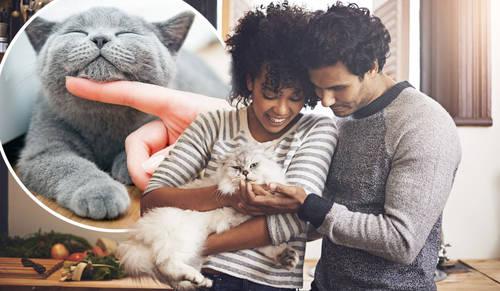Cat girl dating site-ul web,