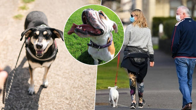 Dog walking twice a day has been made compulsory in Germany