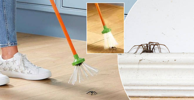 Aldi has brought back its spider catcher