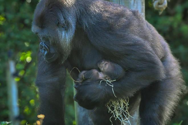 The mum holding her newborn