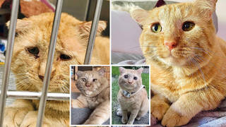 'Saddest cat ever' looks so happy one year after being adopted