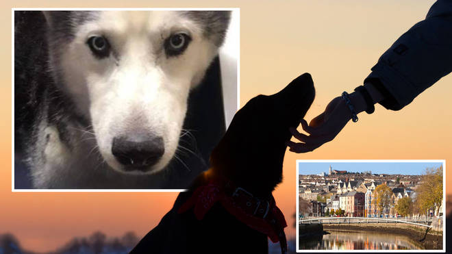 Kaiser the husky has now been reunited with his owners after nine years away