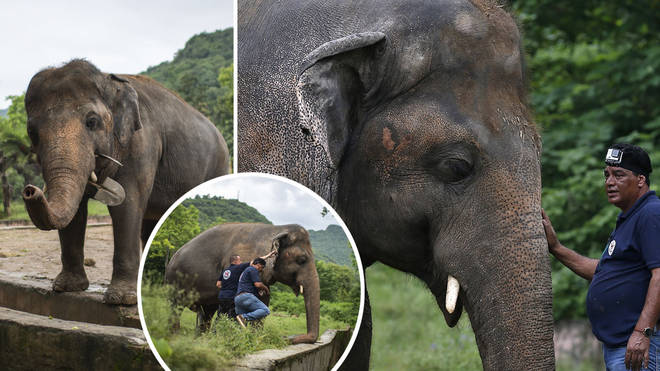 Kaavan the elephant will be moving on to a better life
