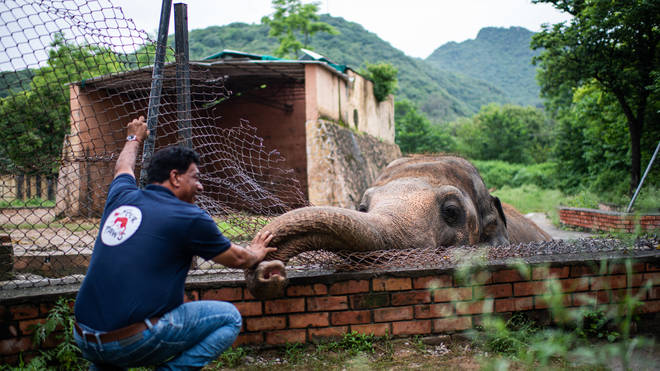 The team from Four Paws carried out a medical examination on Kaavan