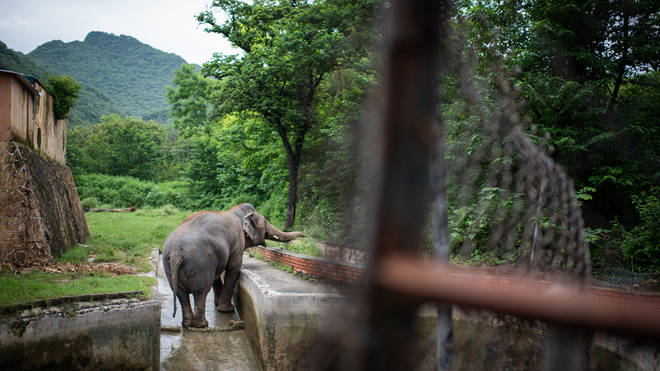 Kaavan has been at the Pakistan zoo for 35 years