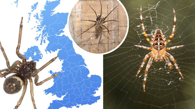 Spider season means homes across the UK are seeing more spider visits