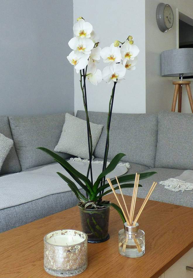Indoor plants by Love Orchids, from £19
