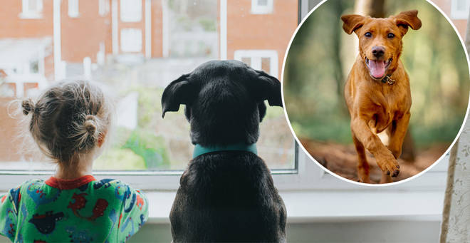 Brits have been picking out some unusual names for their pooches... (stock images)