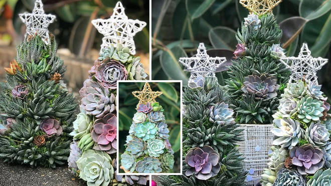 These succulent Christmas trees are so cute