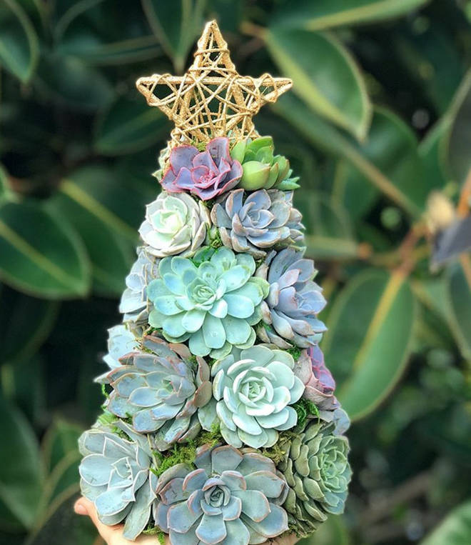 The Aurora Succulent Tree is made up of around 25 succulents