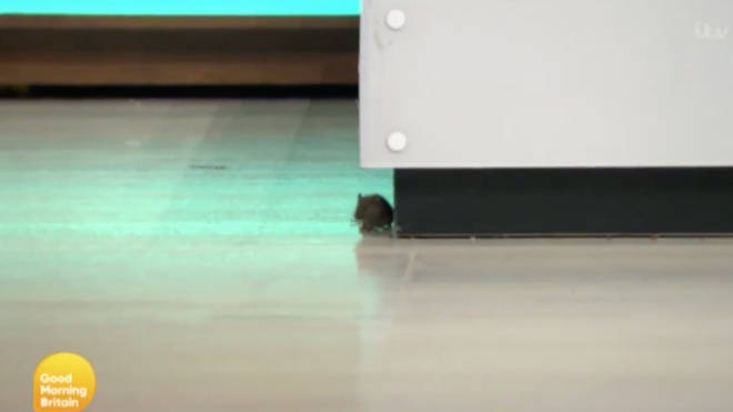 The mouse was looking for food around the Good Morning Britain set