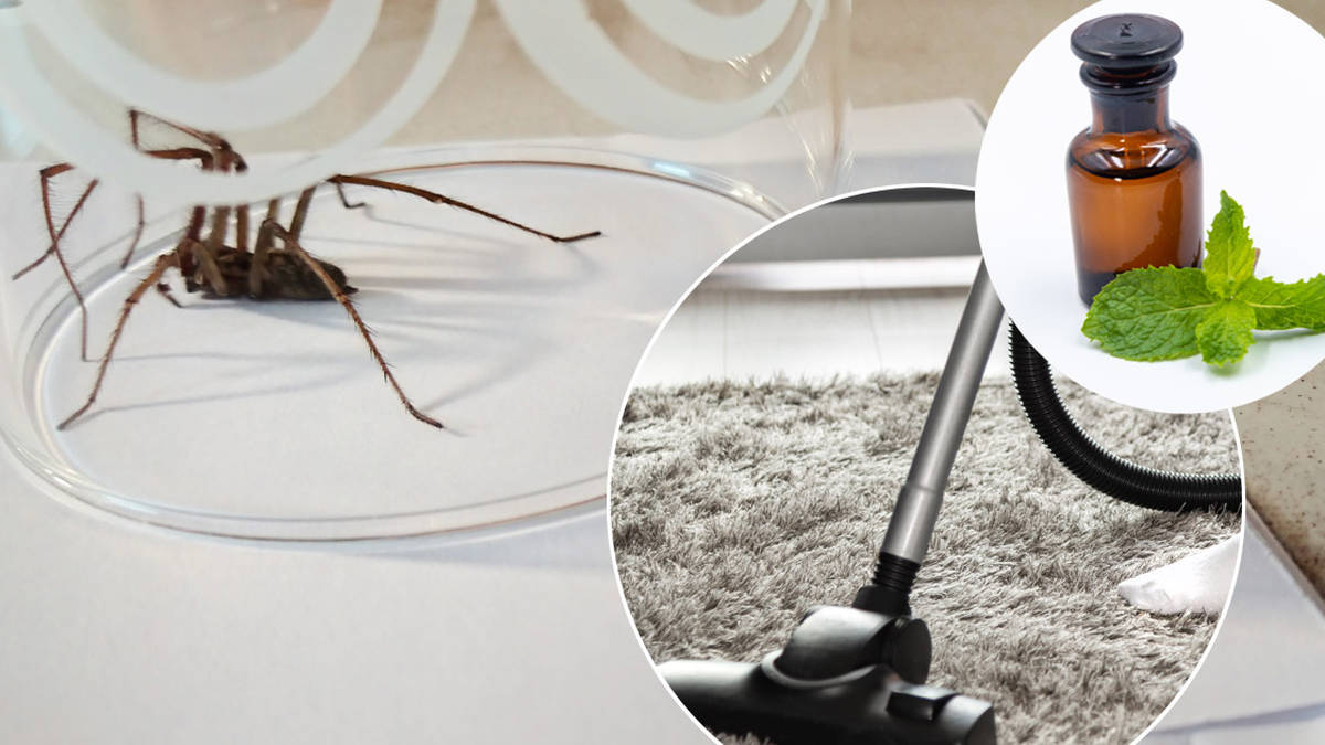 8 ways to protect your house from spiders this autumn