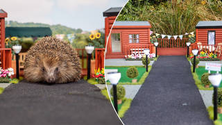 A Hedgehog hotel has been created in the UK