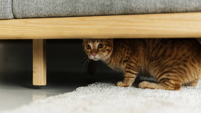 Cats, like dogs, can become scared of the bright lights and loud bangs