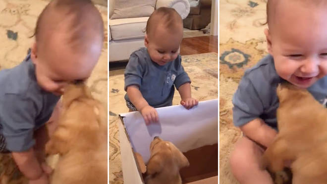The little boy's reaction to the puppy will melt your heart