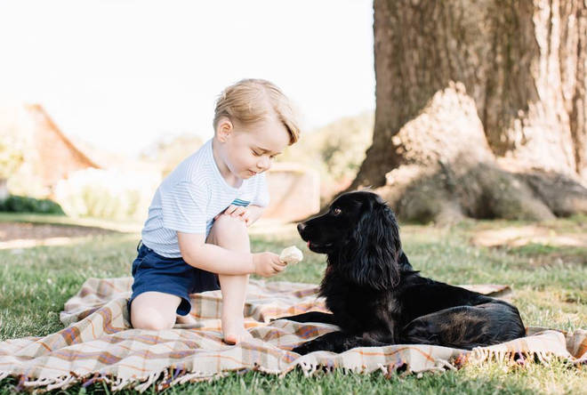 Lupo was bred from a dog belonging to Kate's parents