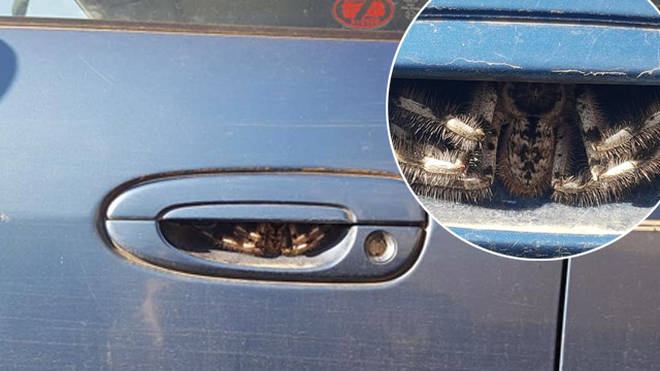 A woman has been left terrified after finding a spider in her door handle