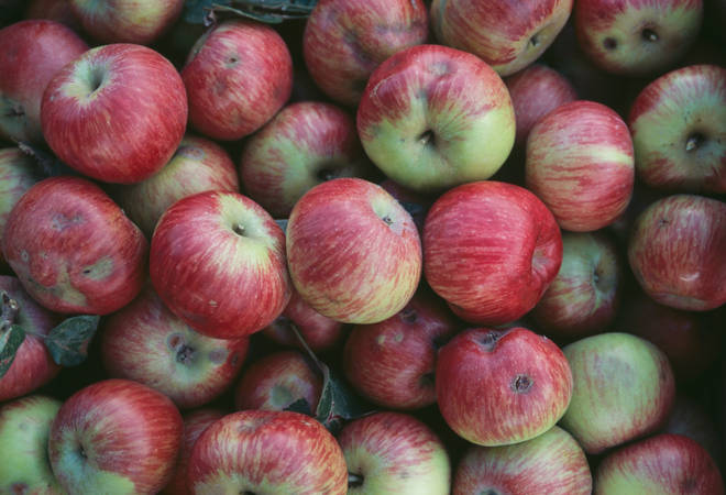 An apple a day keeps the doctor away... and they taste great, too