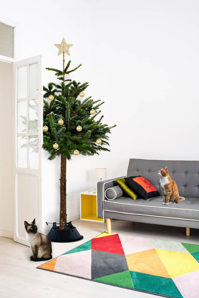 The cat-proof tree has no lower branches, meaning cats are less likely to attack baubles