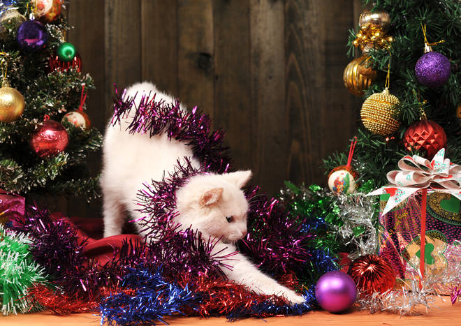 Christmas is the best time of year for inquisitive cats