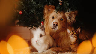 Your pet has been alongside you all of 2020, here are some cute gift ideas for them