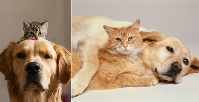 The most popular names for cats and dogs have been revealed (stock image)