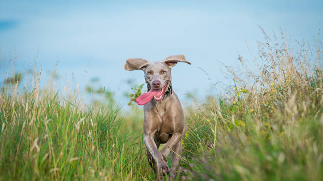 Looking for some name inspiration for your new pet? (stock image)