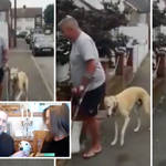 Dog owners who spend £300 on vet bills find out lurcher with 'limp' was copying owner on crutches