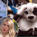 Holly and Phil met a man who spends his time dressed as a rabbit on This Morning