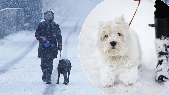 Is it safe to walk your dog in the snow?