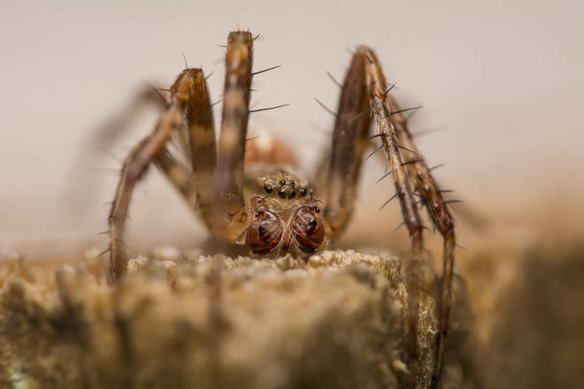 The spiders defied the powers of pest control