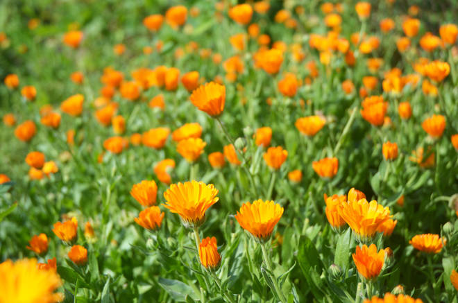 People on the internet suggested the woman continued to plant more orange flowers