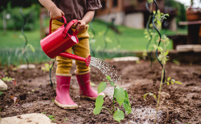 Get your kids learning about vegetables by growing your own