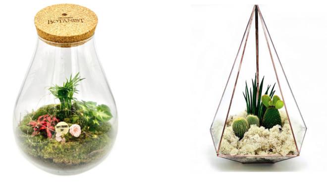Mother's Day terrarium by The Urban Botanist