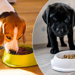 Your pet can get paid to be a dog food tester