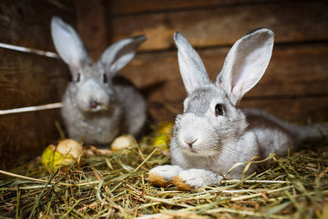 Rabbits and other small furries will enjoy extra enrichment and treats in their enclosures