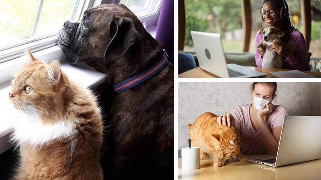 Our beloved pets will need help adjusting to life after lockdown