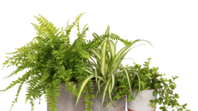 This pet-friendly bundle is perfect for any plant-loving mum