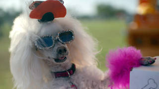 Experts have warned against dressing up your dog for Hallwoeen