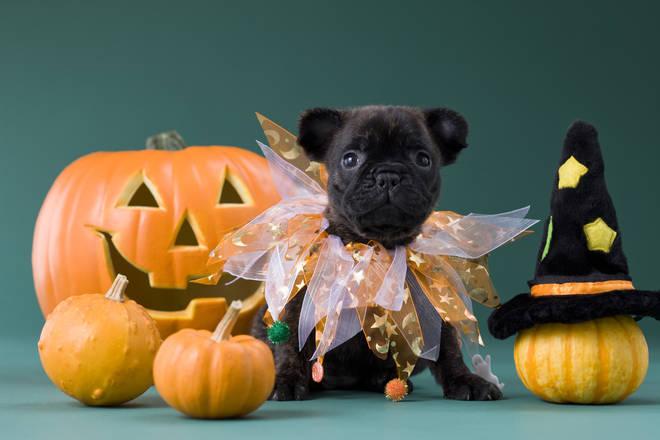fancy dress dog costume