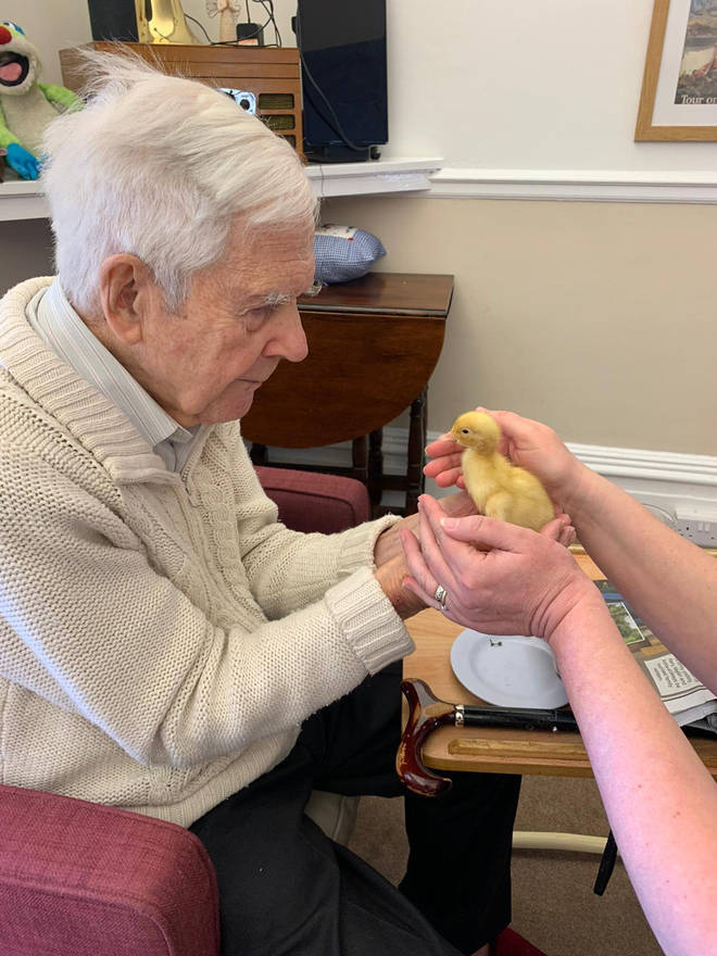 The chicks are said to have bought the residents 'tremendous amounts of joy'