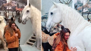 Luisa Zissman has had her horse stuffed