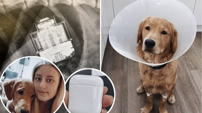 Jimmy the golden retriever was taken to Vets Now after swallowing his owner's headphones