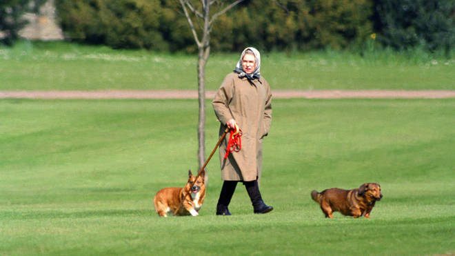 The Queen will reportedly be taking time to walk her new puppies today