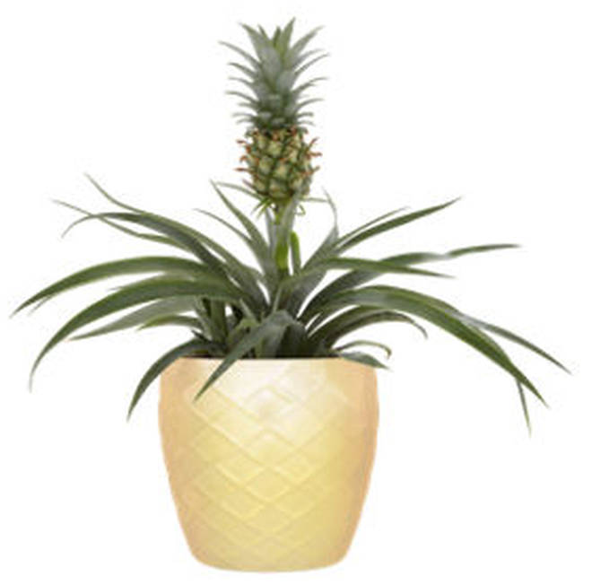 The plant is an absolute bargain... and it looks adorable too