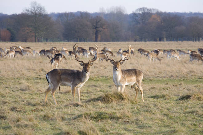 Richmond Park is in eighth place