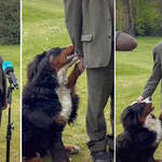 President Michael D. Higgins's dog begs for attention