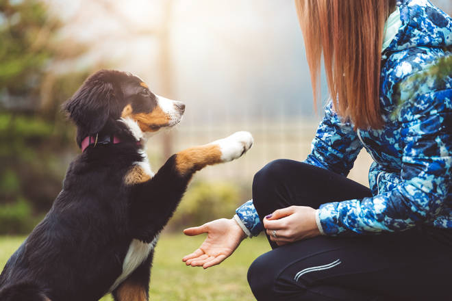 The Dogfather works with owners and their canines to help improve their behaviour